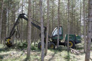 Procesadora Forestal